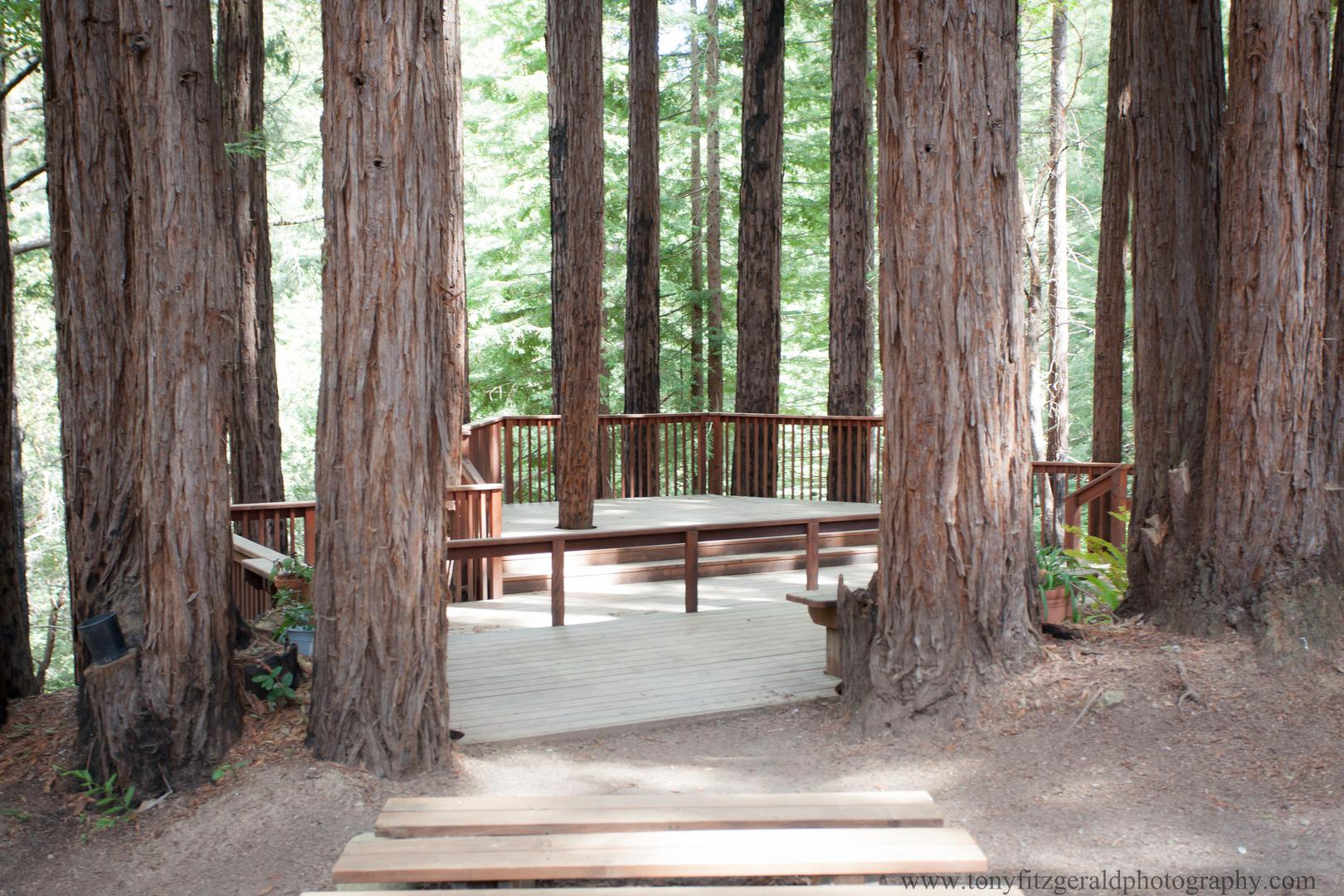 space at Amphitheatre of the Redwoods